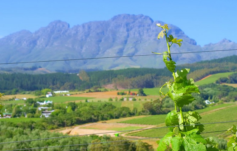 Wineries in and around Hermanus