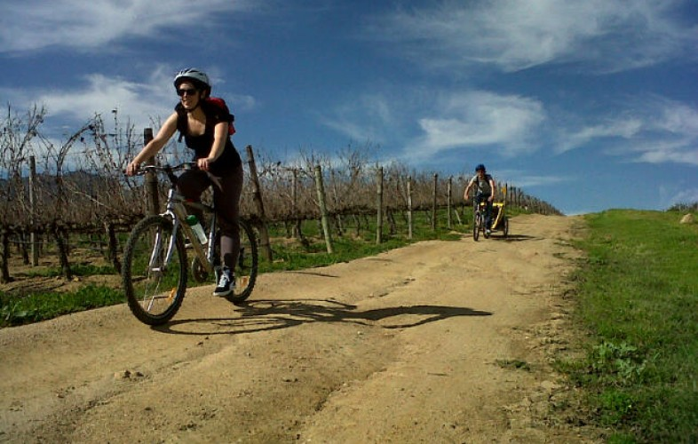 Go Wine Tasting on an Eco-friendly Bike Tour